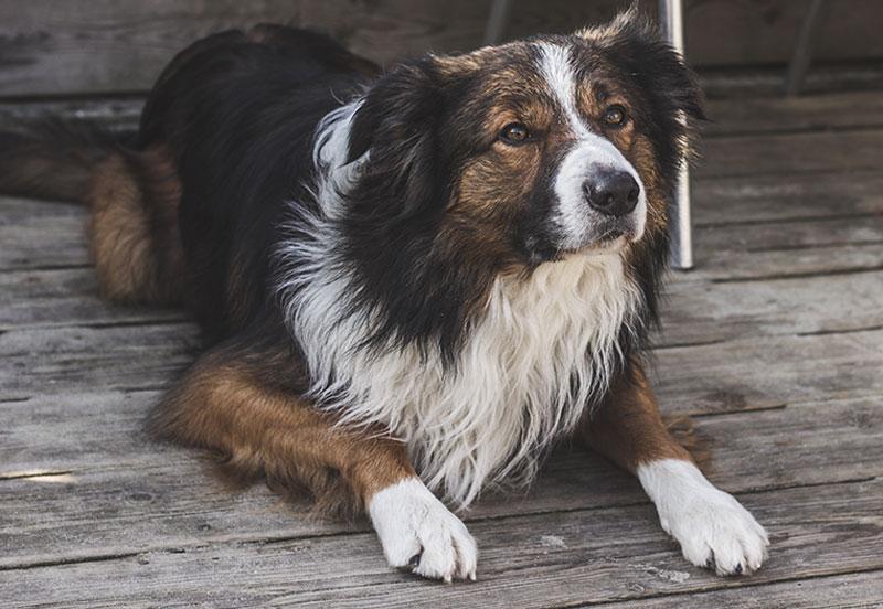 koiran nyppiminen vantaa