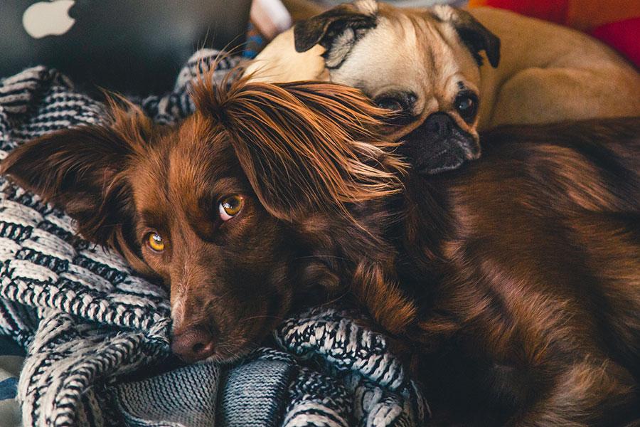 koiran turkinpesu vantaa